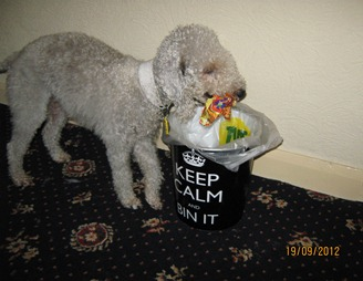 bramble putting rubbish in the bin 013
