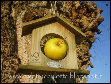 Ghiotte leccornie per gli uccellini dell'OrtoQua (67)