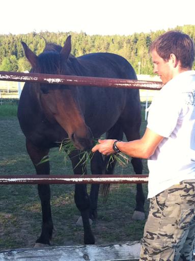 Hungrig häst