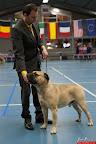 20130511-BMCN-Bullmastiff-Championship-Clubmatch-1669.jpg