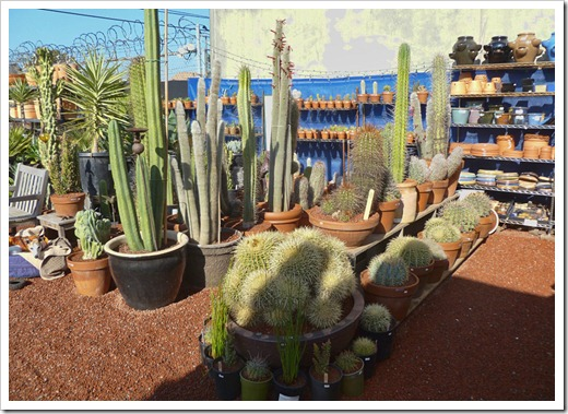 120208_CactusJungle_23