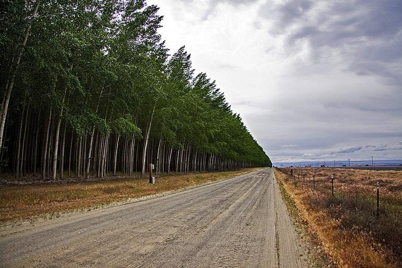boardman-tree-farm-13