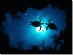 Encontro tartarugas