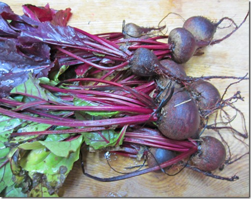 Red Ace and Bull's Blood beets