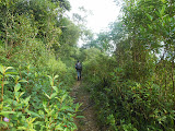 The pleasant trail to Gunung Ranai (Dan Quinn, September 2013)