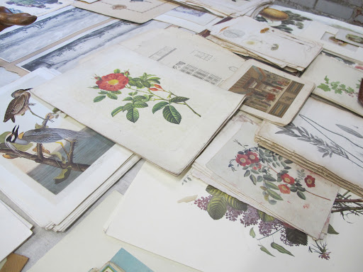 Such pretty botanical prints.