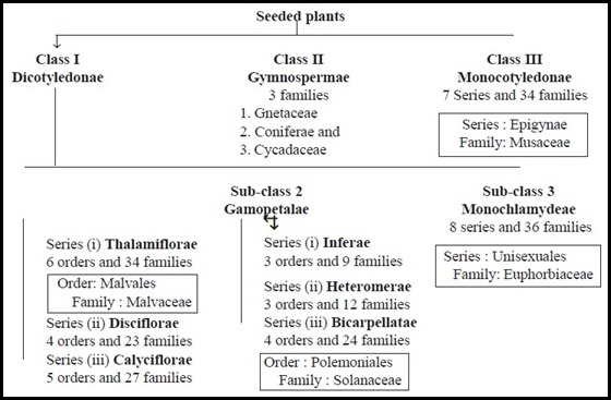 Bentham and Hooker's classificiation of plants