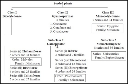 Captivating Merits And Demerits Of Bentham And Hookeru0027s Classification | Plant Science  4 U