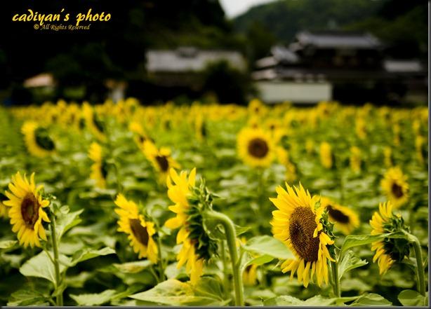 D700_2012-07-25_016