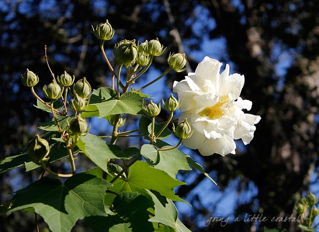 white flower_edited-1