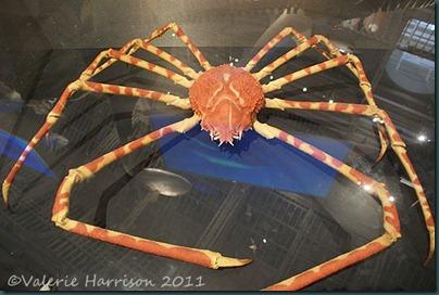 16-crab