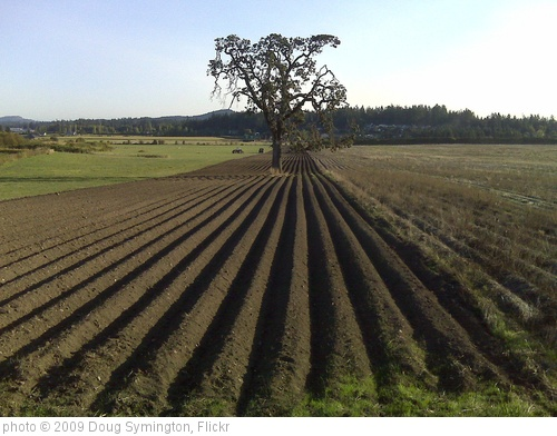 'Furrows and my fav oak' photo (c) 2009, Doug Symington - license: http://creativecommons.org/licenses/by/2.0/
