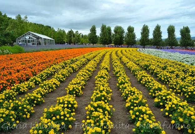 Glória Ishizaka - Farm Tomita 80