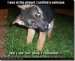 6 Sniffed Suitcase at Airport