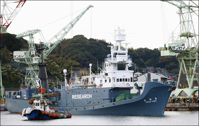 The Yushin Maru and two other whaling vessels leave the port of Shimonoseki, Yamaguchi Prefecture, on 7 December 2013 for Japan's annual winter slaughter in the Antarctic Ocean. Photo: KYODO