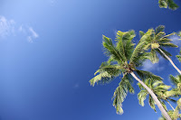 Palm trees, blue sky