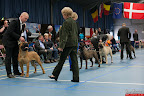 20130510-Bullmastiff-Worldcup-1345.jpg