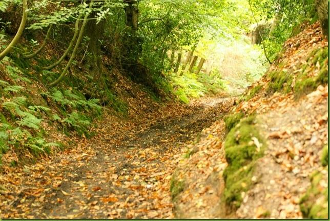 Norfolk coastal path Cromer to Sheringham