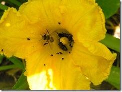 včely na květu a matečniky 183