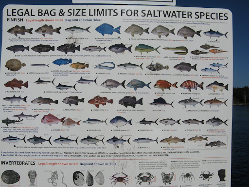 North Carolina Saltwater Fish ID Chart http://picasaweb.google.com/lh/photo/ucEhLiDNEsN2LmoIJaEsiw