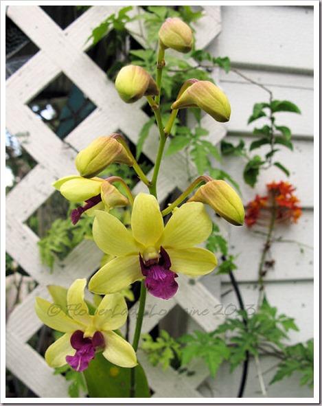04-29-d-orchids1