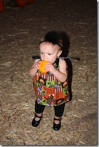 pumpkin patch 040