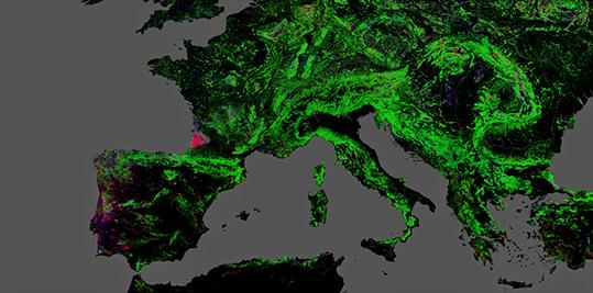 Florestas Landsat