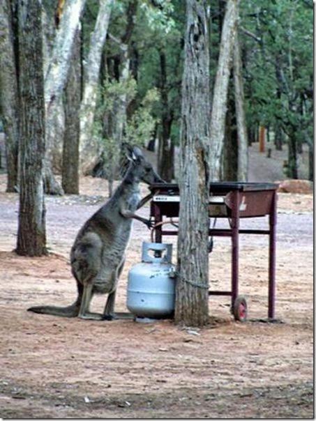 meanwhile-australia-17