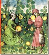 Récolte de melons BnF, ms latin 9333, folio 19