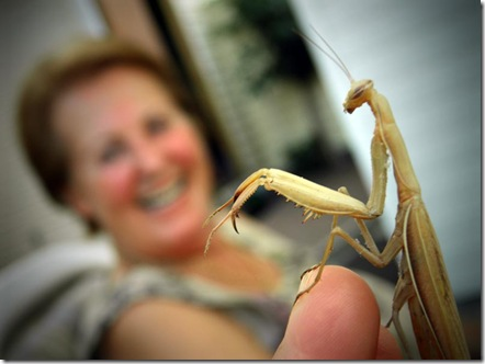 Italia-mantis