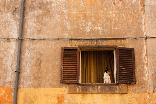 A Dog at the Window in Trastevere