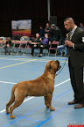 20130510-Bullmastiff-Worldcup-0445.jpg
