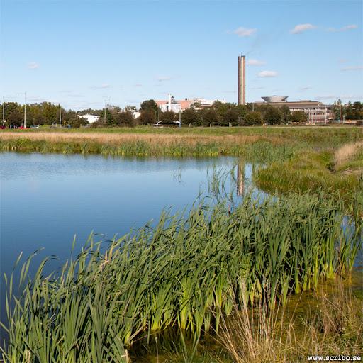 Dagvattendammen på Kungsängen med värmeverket i fonden