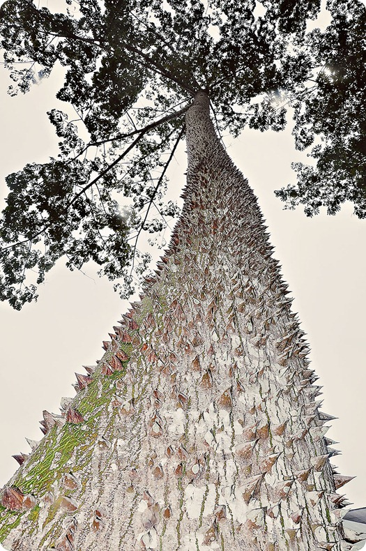 Spiky-Tree