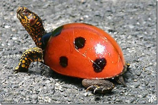 humor tortugas (46)