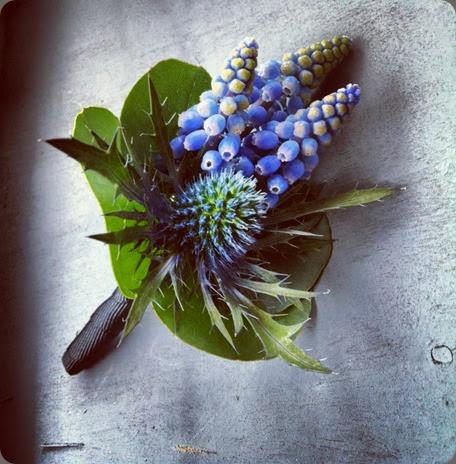 muscari 935245_10152846027455510_2063999467_n planet flowers