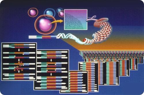 Reação em Cadeia de Polimerase (PCR, do inglês Polymerase Chain Reaction)