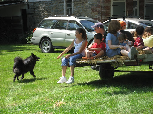 A Vollmer reunion tradition: the dogs chase Uncle Jack's hayride!