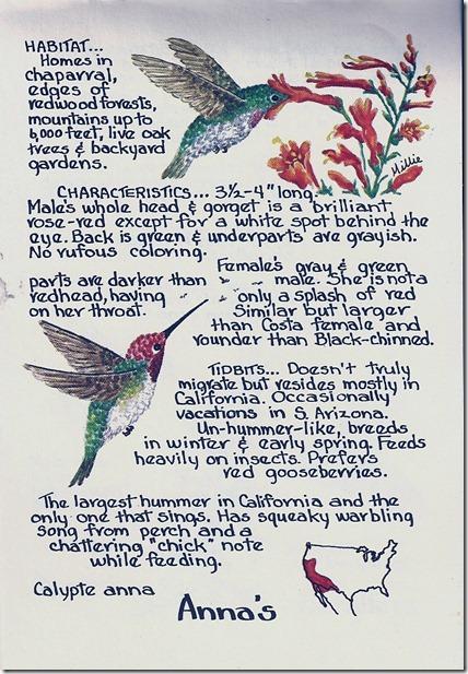Anna's hummingbird description