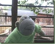 Paignton Zoo 7