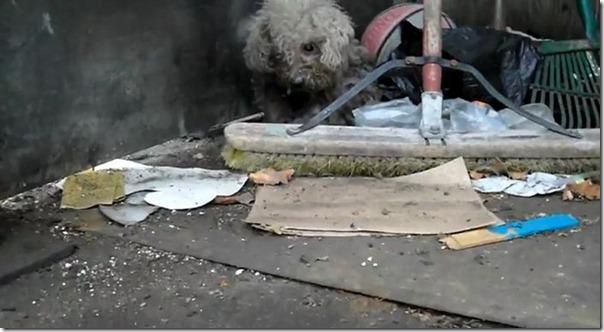 Cachorro cego abandonado encontrou uma nova familia (4)