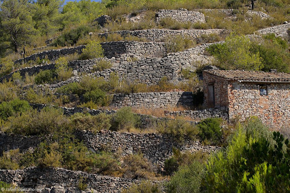 Mas al barranc dels Llagossets, Damunt Roca, serra de la FigueraEl Lloar, Priorat, Tarragona