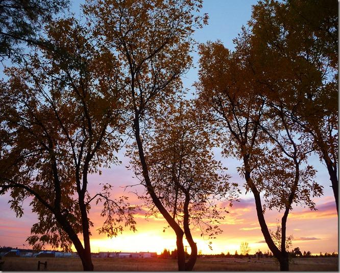 sunsets 021