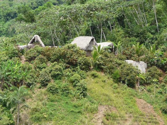 Comunidad Santa Rosa, Rio Zongo (alt. 600 m). Bolivie, 17 janvier 2008. Photo : J. F. Christensen