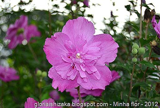 Glória Ishizaka - minhas flores - 2012 - 1