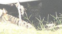 1 new kitties 10.2011 both kitties under camper