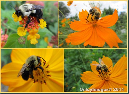 bee collage