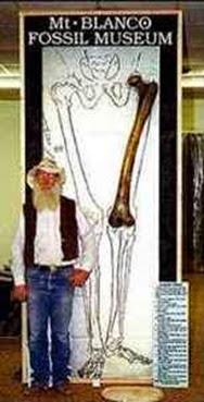 fêmur-de-gigante