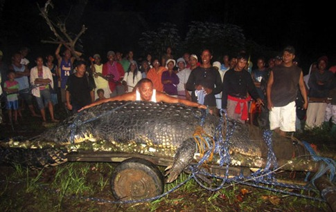 Villagers capture world's largest crocodile (which weighs one ton and is 21ft long)