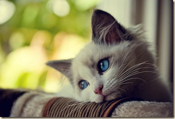 Kitteh-SadWistful